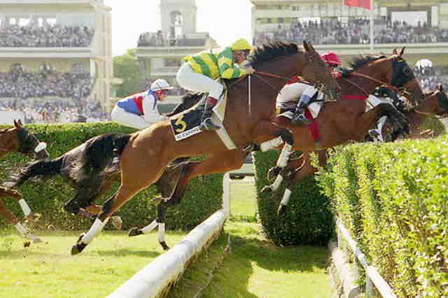 AL CAPONE II cheval