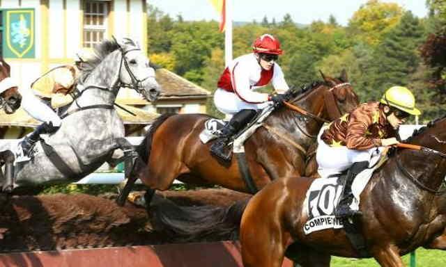 ANOUMA FREEDOM cheval