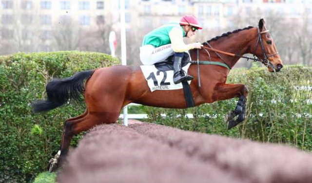 BONAPARTE SIZING cheval