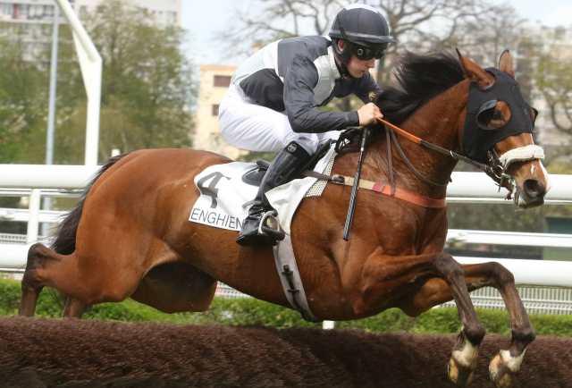 COCODY DU BANCO cheval