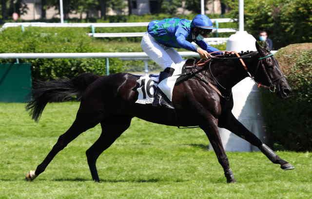 D'JANGO cheval