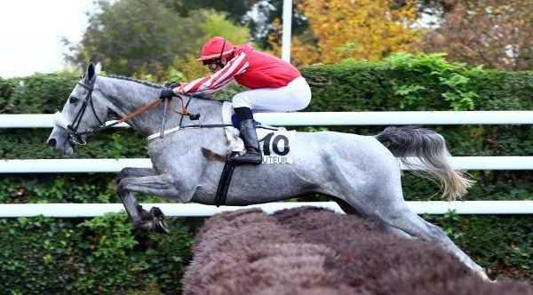 DERNIER CRI cheval