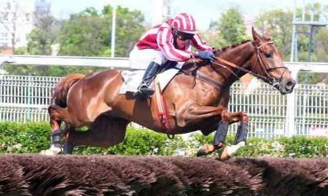 DOCTEUR DE BALLON cheval