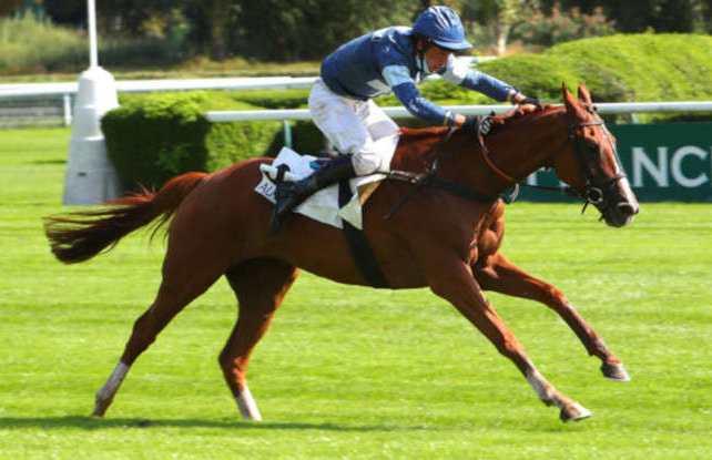 ELVIS DE BALME cheval