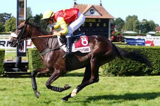 ENOLA GAY cheval