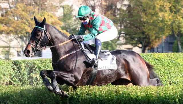 FRET D'ESTRUVAL cheval