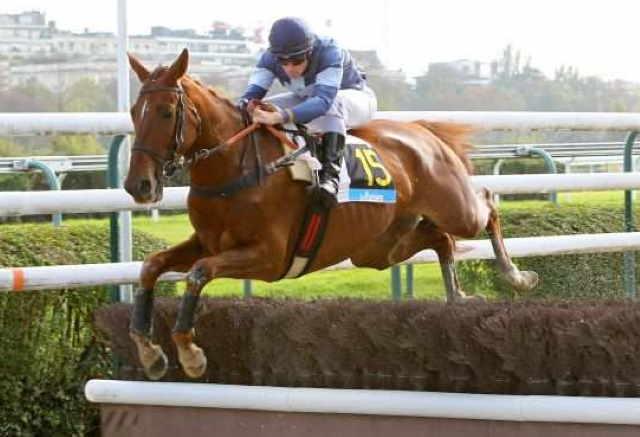 VIKING DE BALME cheval