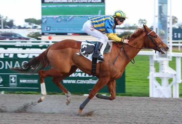ALMEIDA GIRL cheval