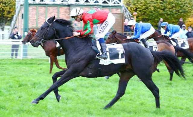 ARIFUSHI cheval
