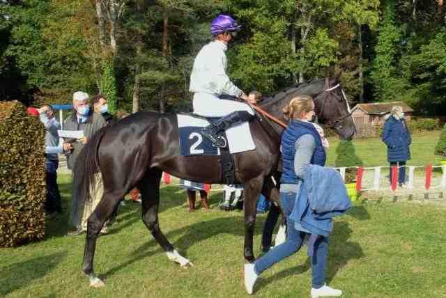 BAZOQUES cheval
