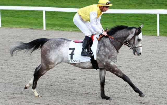 BOBYDARGENT cheval