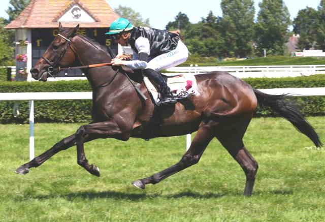 BROKEBACK MOUNTAIN cheval
