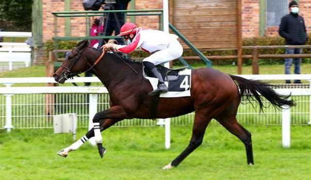 CARLTON CHOICE cheval