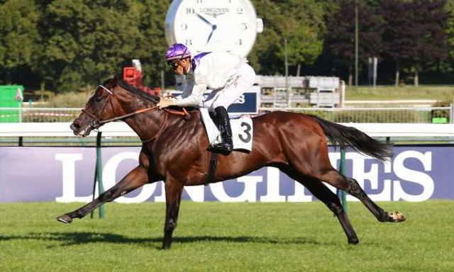 CHAILLOUE cheval