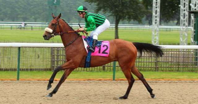 Cheval ELUSIVE DANCER