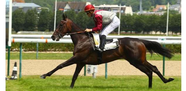 Cheval FEE D'ARTOIS