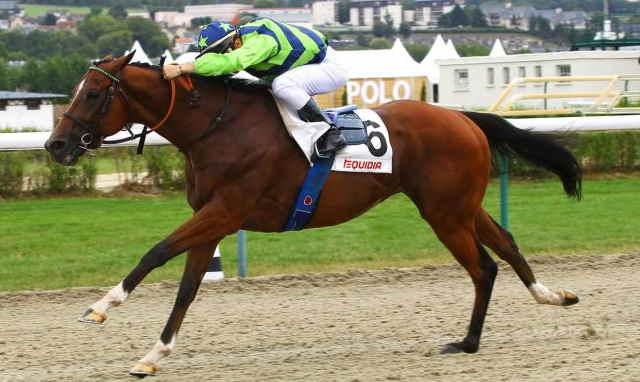 FRENCH PEGASUS cheval
