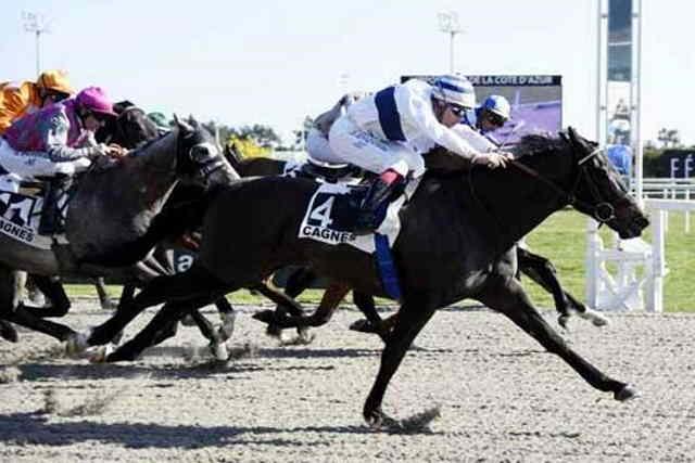 GRIS D'ARGENT cheval