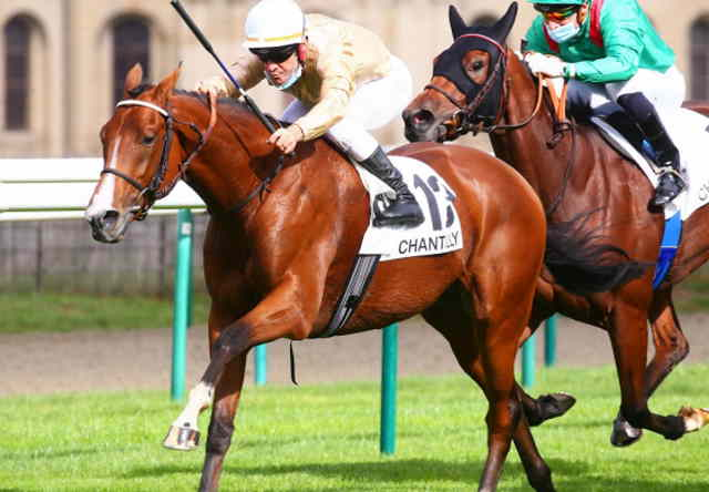 HALIPHON cheval