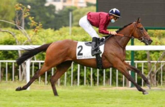INCA MAN cheval