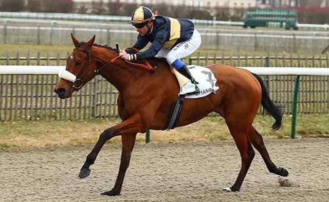 INFINITE PASSION cheval