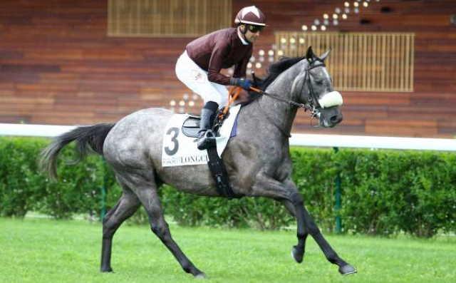 KATDAR cheval