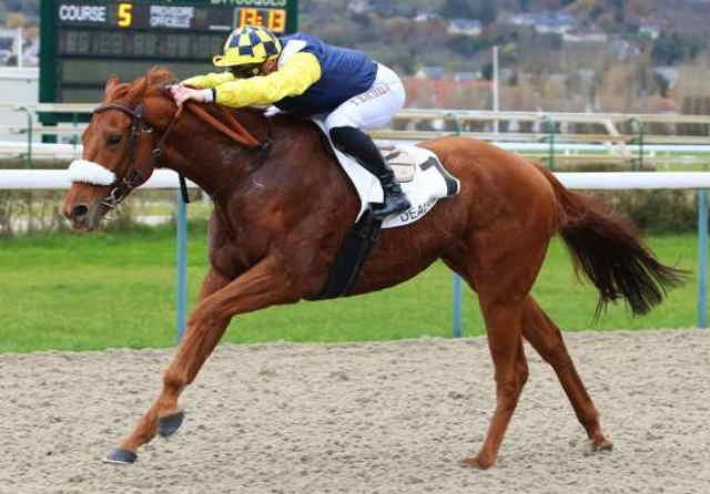 KHOCHENKO cheval