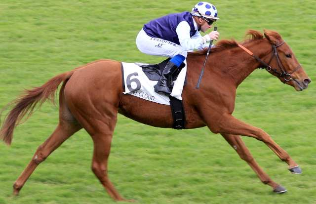 LA POUTANESCA cheval