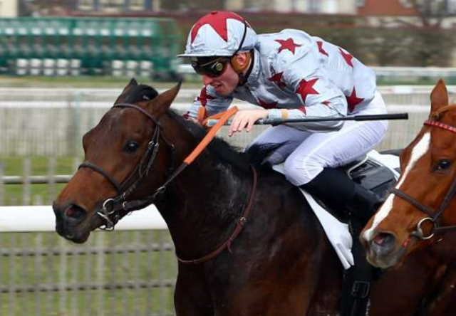 MORAL GAGNANT cheval