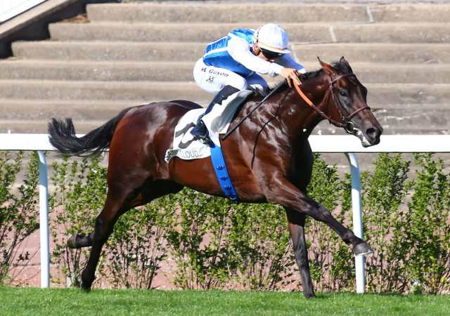 OXALIS cheval
