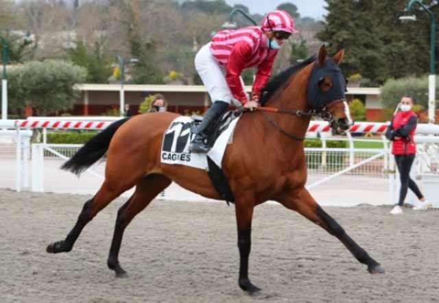 PALUS ARGENTEUS cheval