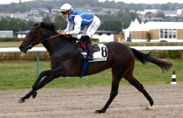 PAPUA cheval