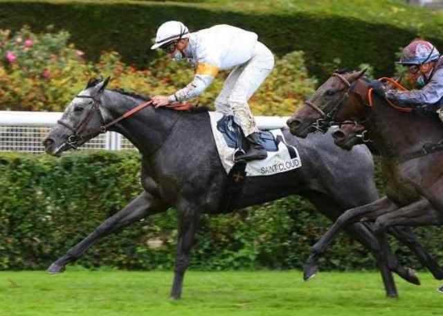 SAN VALENTINA cheval