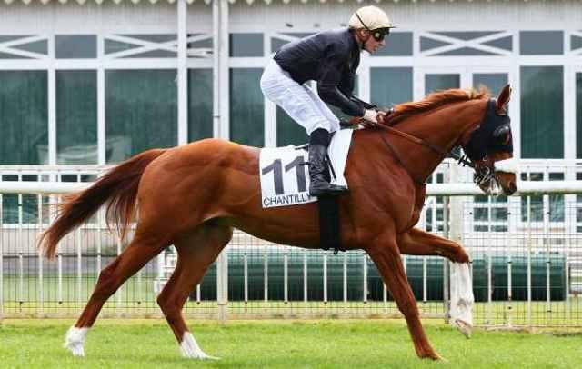 SHAMSABAD cheval
