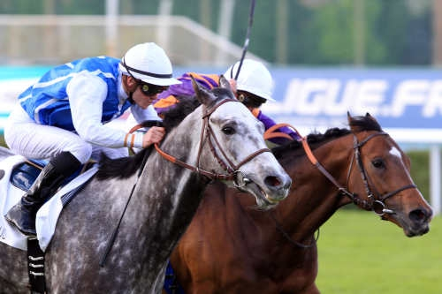 Cheval Solow - Olivier PESLIER