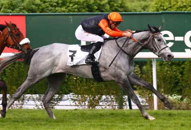 TORONADA cheval
