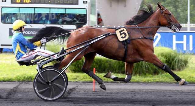 AURA SL cheval