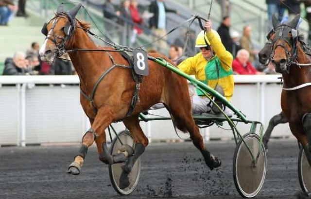 BALZAC DE L'ITON cheval