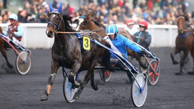 BAMOUR cheval
