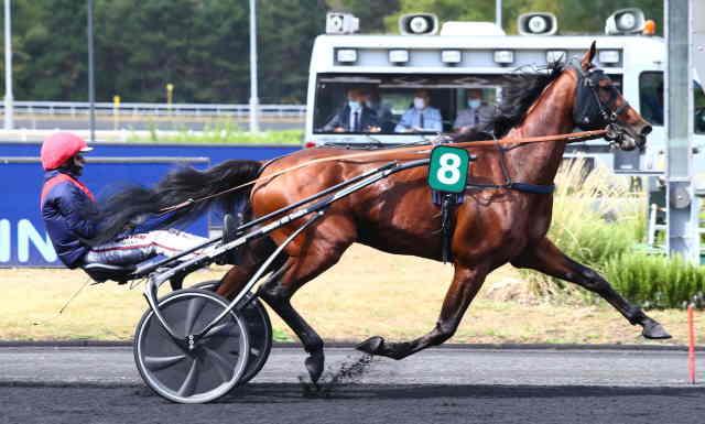 BO C. cheval