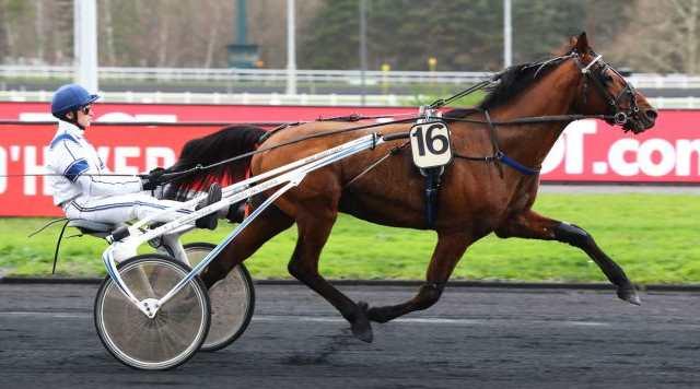 CLASSIC HAUFOR cheval