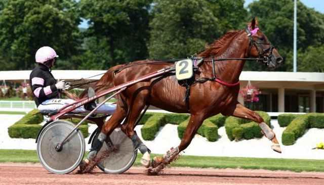 COBALT CHATHO cheval