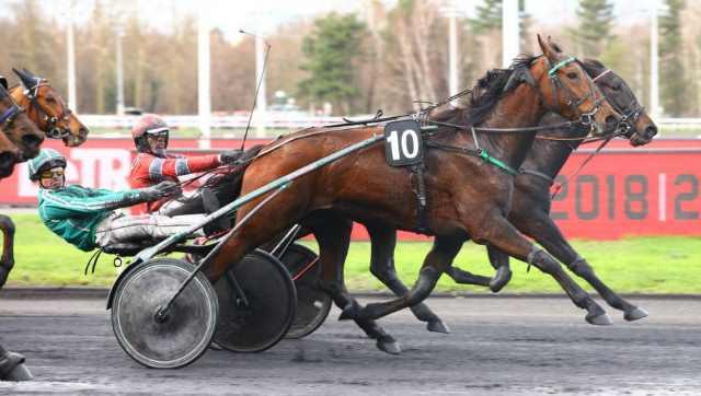CONTRÉE D'ÉRABLE cheval