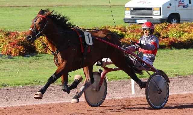 DEUS EX MACHINA cheval