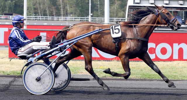 DIVINE MESLOISE cheval