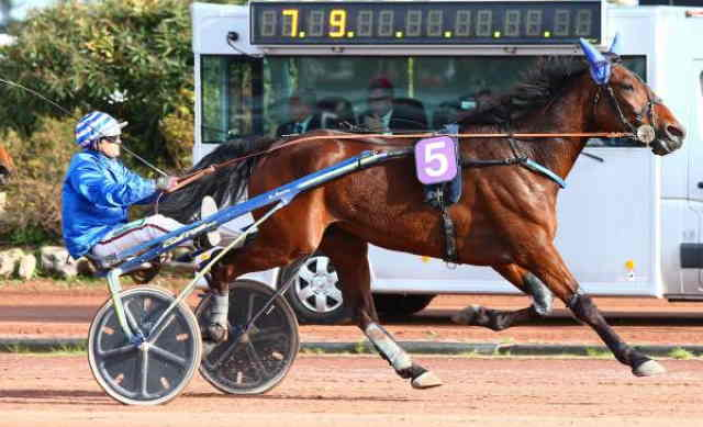 DJANGO DU BOCAGE cheval