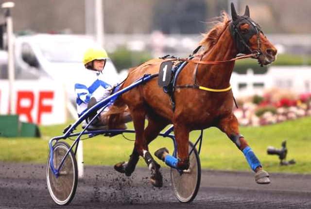 DORADO BELLO cheval
