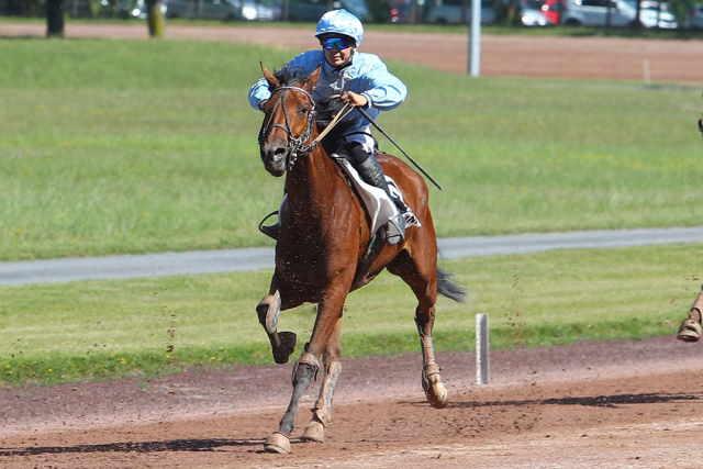 DRAGA DU CHATELET cheval dans une course au trot monté