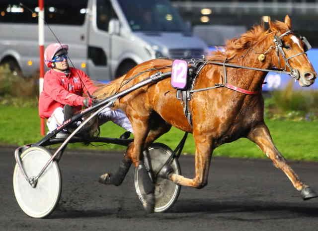 DREAMER DE CHENU cheval