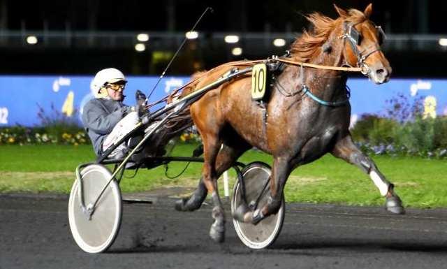 EDDY DU VIVIER cheval